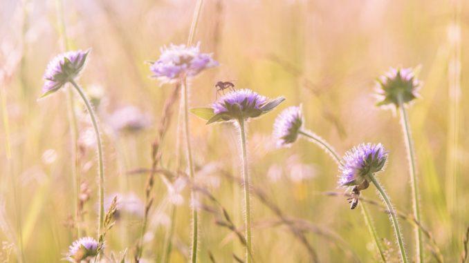Australische Blütenessenzen – Wirkungen und Anwendungsbereiche